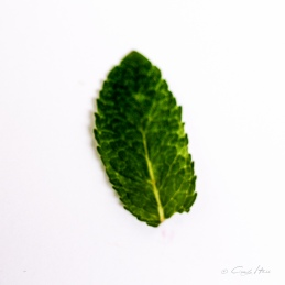 Minze, Blatt, Natur