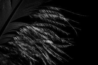 feather, Makro, b&w, minimal, minimalist