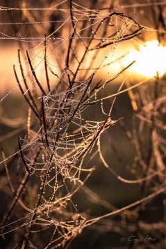 Aue, Nebel, Herbst, Fluss, Eilenburg, Dübener Heide, Morgen, Altweibersommer, Mulde