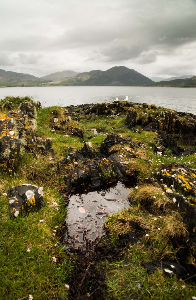 seagulls, Möwen, Scotland, Schottland, Oban, Barcaldine